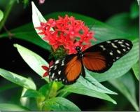 dainty butterfly