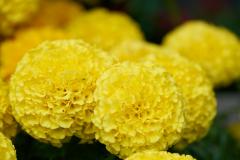 florals-web