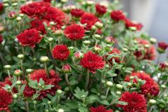 florals_-web1