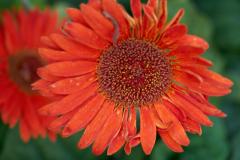 flowers_8-web