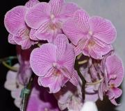 orchids2011.1