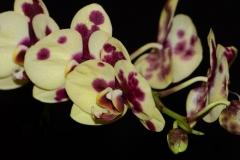 orchids2011.3