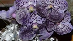 orchids2011.9