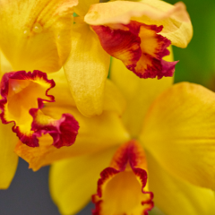 orchids2016_1
