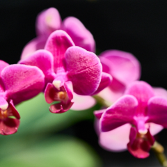 orchids2016_22