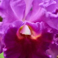 orchids2016_34