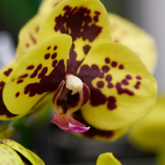 orchids2016_5