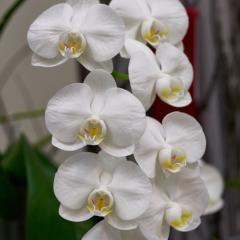 orchids2016_51