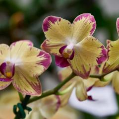 orchids2016_52