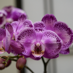 orchids2016_7