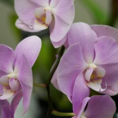 orchids2016_9