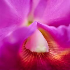 orchids2016