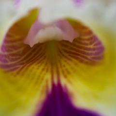 orchids2016_12