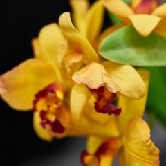 orchids2016_15
