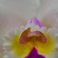 orchids2016_2