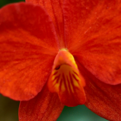 orchids2016_28