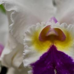 orchids2016_32