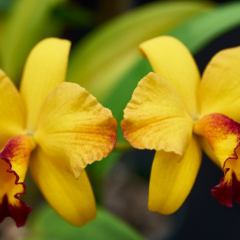 orchids2016_35