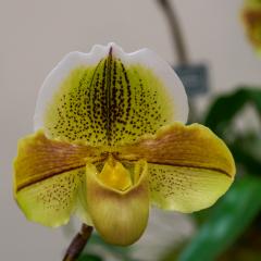 orchids2016_45