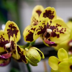 orchids2016_47