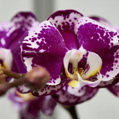 orchids2016_48