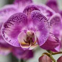 orchids2016_49