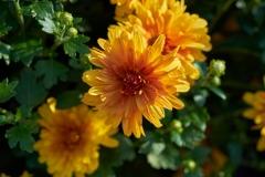 yellow orange