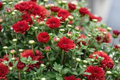 florals_ web1