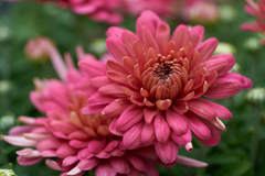 florals_2 web