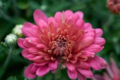 florals_3 web