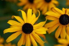 flowers_1 web