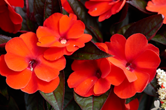 flowers_2 web