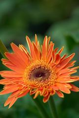 flowers_4 web