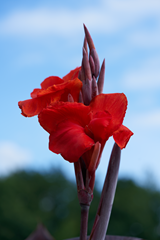 flowers_5 web