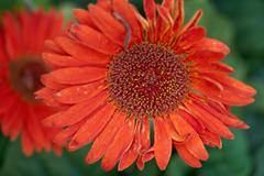 flowers_8 web