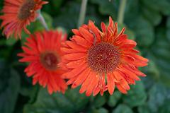 flowers_9 web